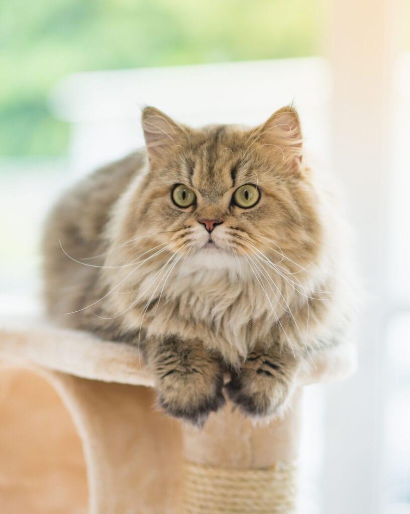 Cat on Indoor Tree