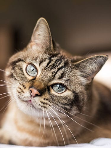 Tabby cat lounging in sun copy